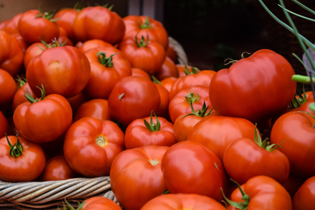 growing tomatoes outdoors